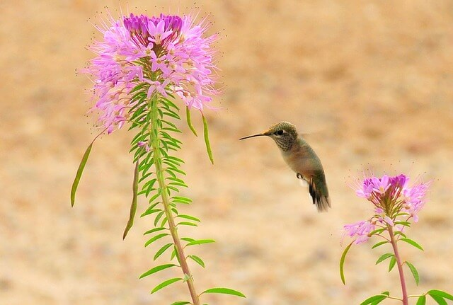 attract hummingbirds to garden
