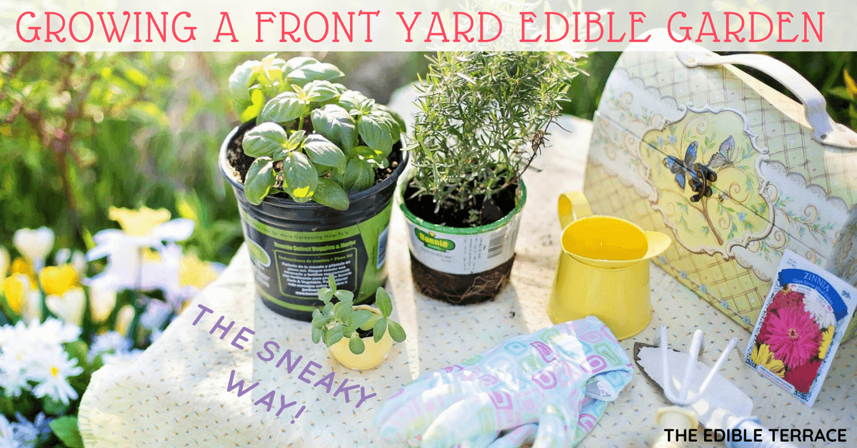 Growing A Front Yard Edible Garden – the Sneaky Way