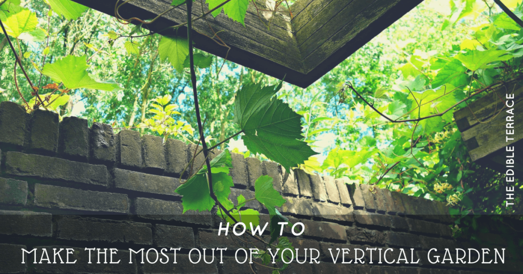 How to Make the Most Out of Your Vertical Garden