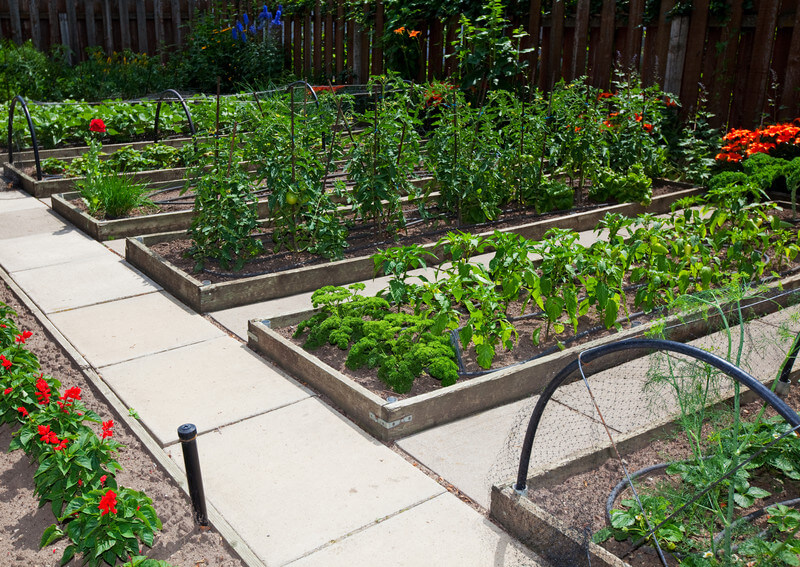 Late planting vegetables