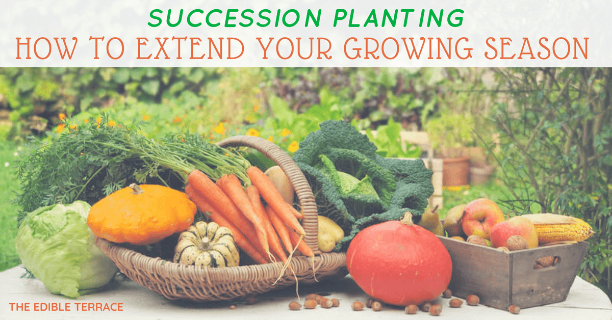 Succession Planting How To Extend The Growing Season