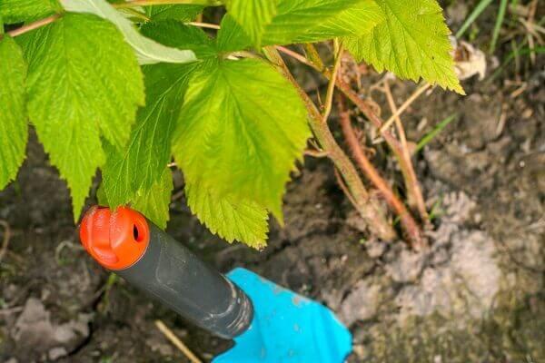 Adding Earthworms to Your Garden