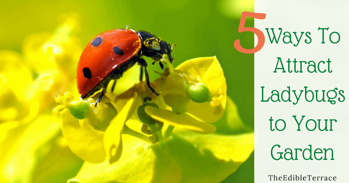5 Ways To Attract Ladybugs to My Garden