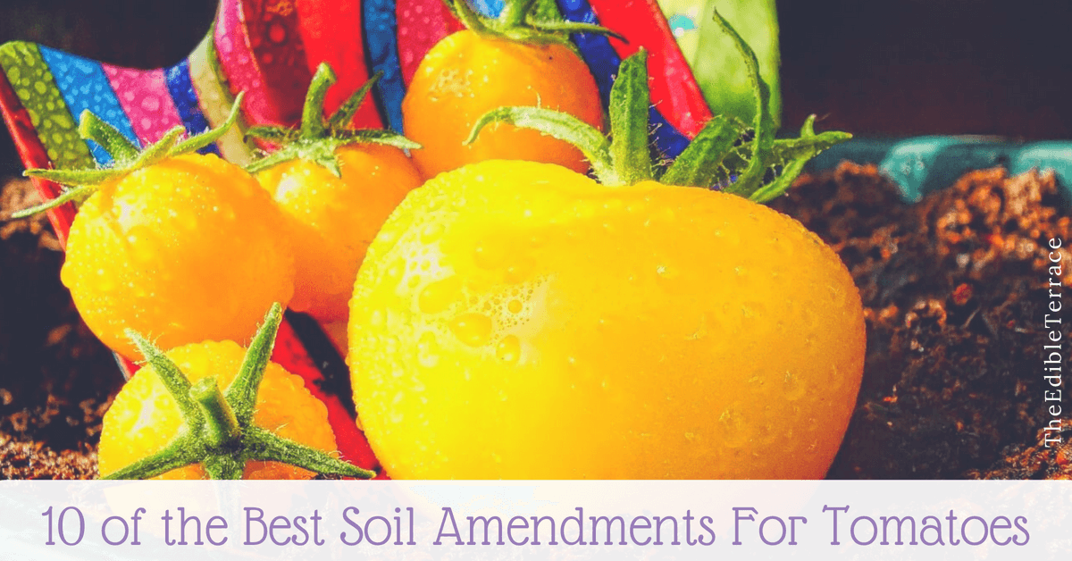 Best soil amendments for tomatoes