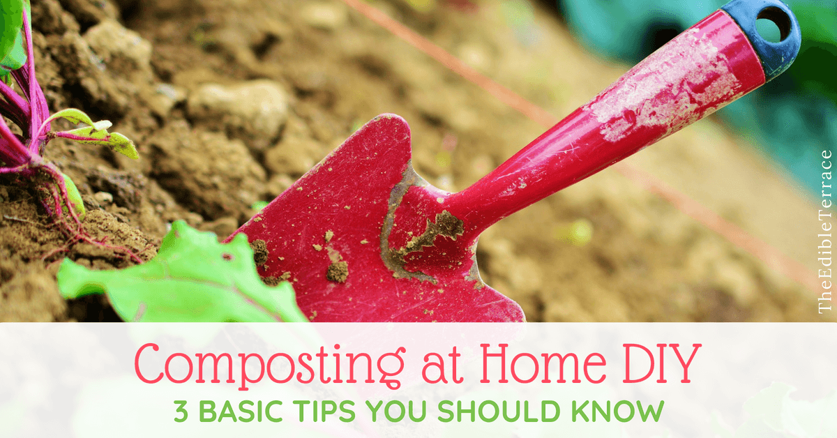 Composting at Home DIY – 3 Basic Tips You Should Know