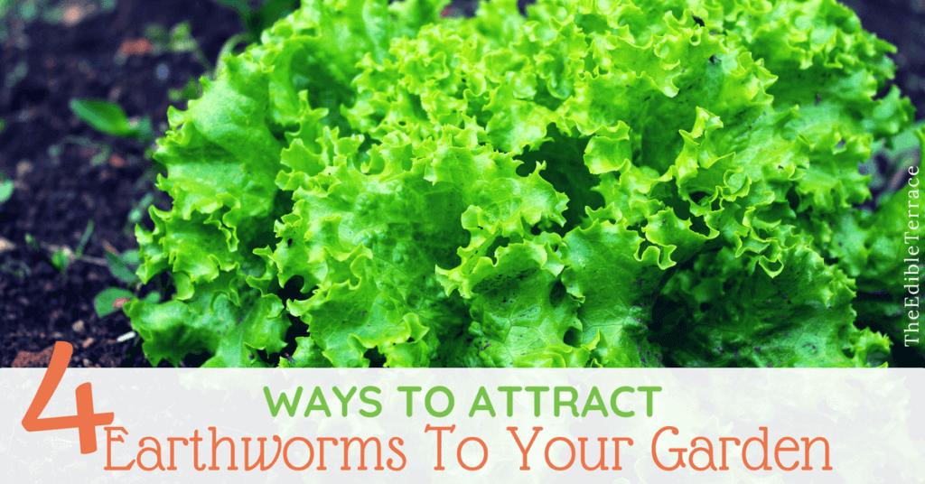 Earthworms for Garden