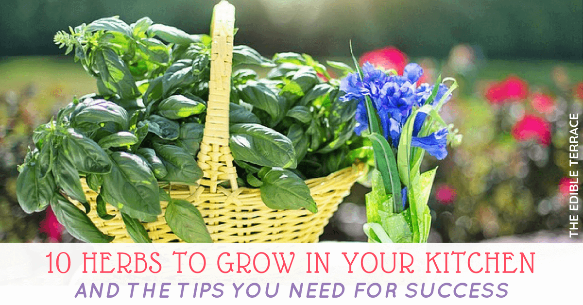 10 Herbs to Grow in Your Kitchen & The Tips You Need For Success