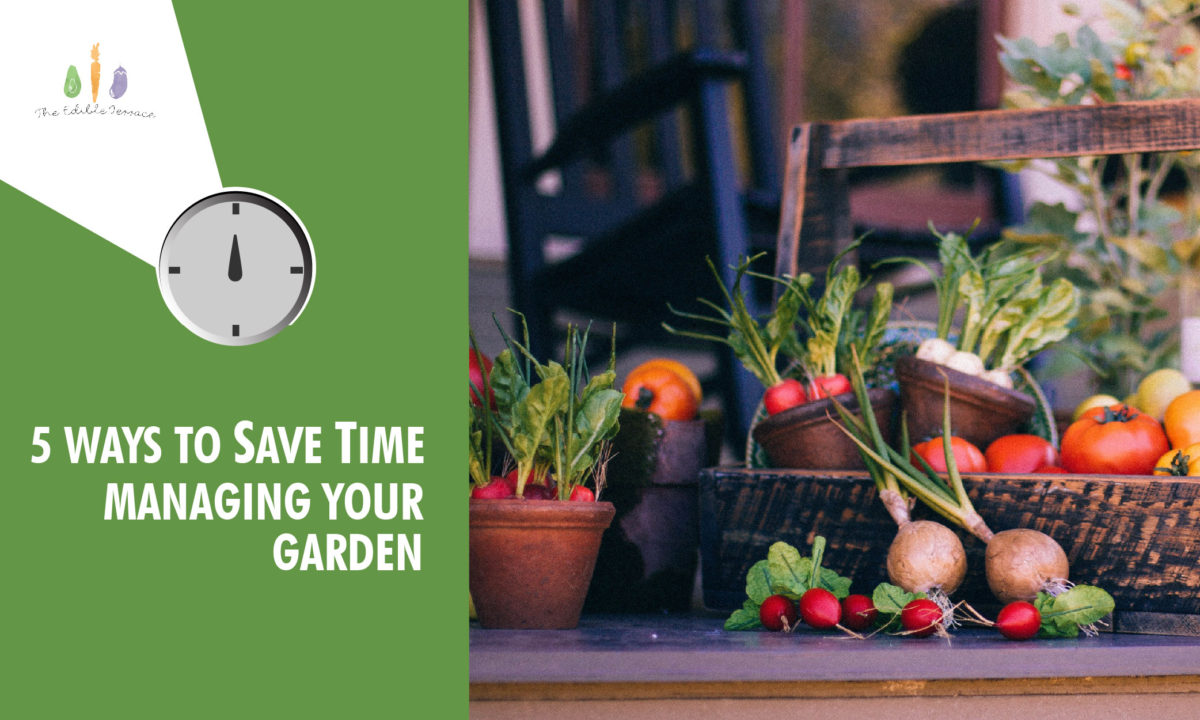 5 Unique Ways to Save Time Managing your Garden