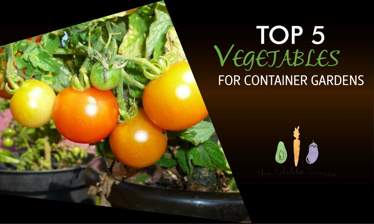 Top 5 Vegetables for Container Gardens