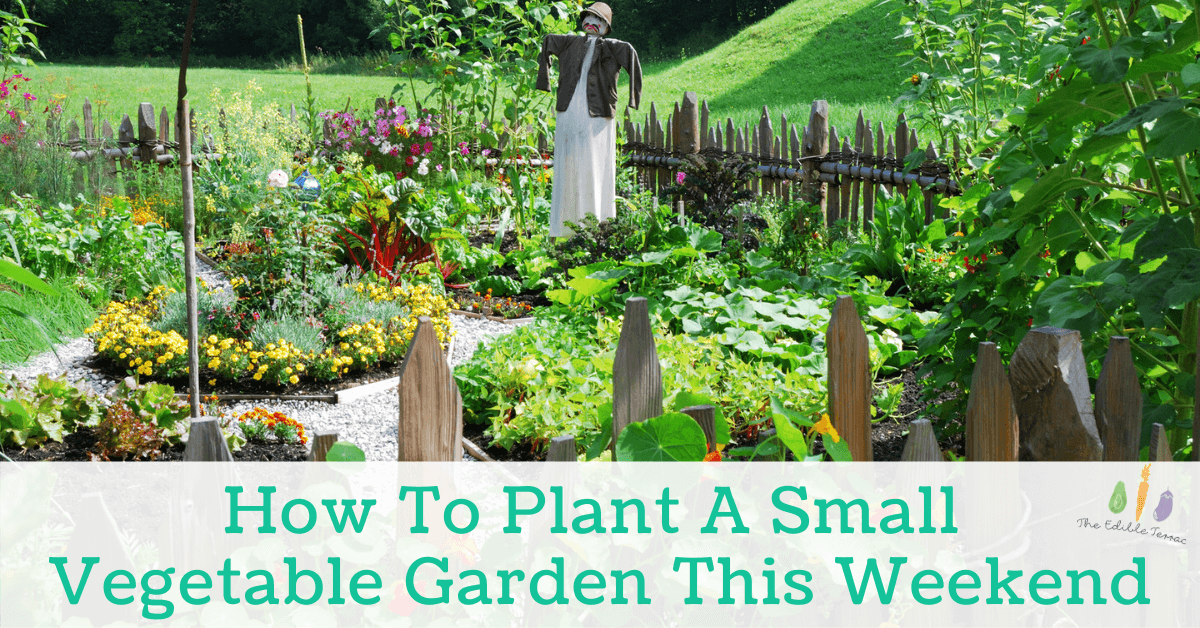 How To Plant A Small Vegetable Garden This Weekend